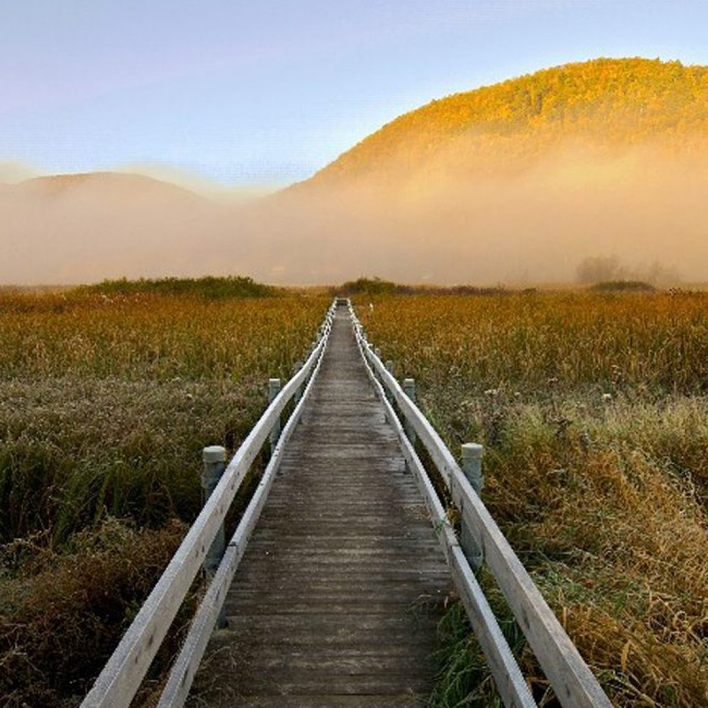 West Rutland Marsh boardwalk